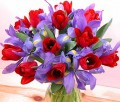 Blue Iris and ravishing red Tulips