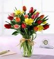 Mixed Tulips in vase