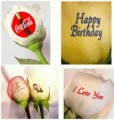 Personalized Roses