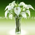 Calla in Vase